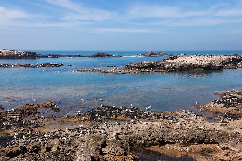 Atlantic coast with seagulls in Essaouira, Morocco.