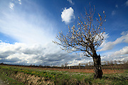 blossoming cherry tree looking like a satellite disk of a radio astronomy observatory catching a cloud