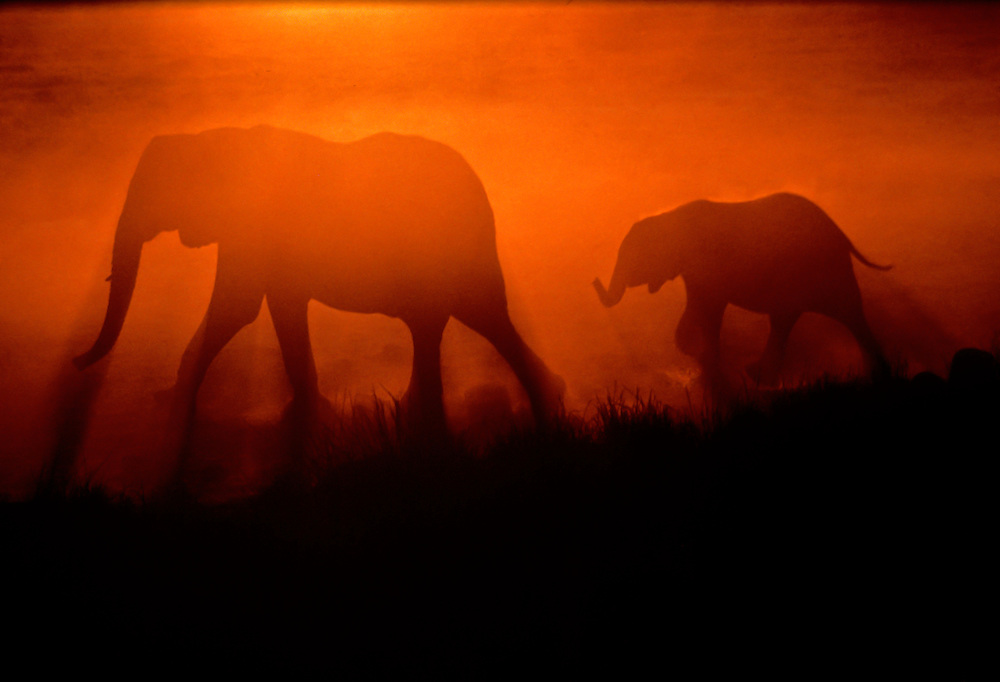 A mother and baby elephant walk along the grassland by sunset.