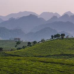 Moc Chau Tea Plantation, Son La Province