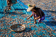 Myanmar, Ngapali. Women work segregating fish.<br /> Every single morning all the fisherman from the little village at Ngapali Beach come back home with their night catch. At the beach all the women wait for them and afterwards work with drying and selling fish and other creatures from the sea begins.