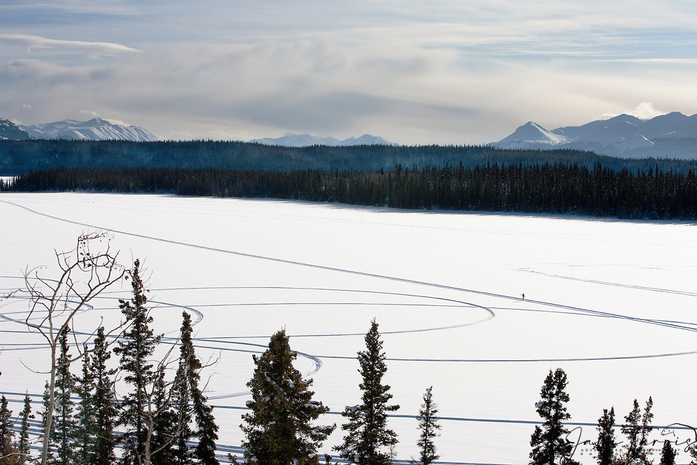 A single skier on nordic skis traverses across a frozen lake in the north of Canada in the winter, Cowley Lake, The Yukon Territory, Canada
