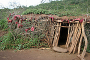Africa, Tanzania, members of the Datoga tribe wood stick hovel, the roof is made of green grass and weeds for better insulation April 2006