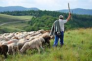 Elevage de moutons.Jean Claude Boisson, berger de transhumance au lac des Pises.