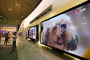 The IFA (Internationale Funkausstellung) in Berlin is the World's biggest trade fair for consumer electronics..Huge pet plasma TVs by LG Electronics.
