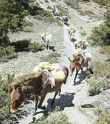 THEMENBILD - Trekkingtour in Nepal um die Annapurna Gebirgskette im Himalaya Gebirge. Das Bild wurde im Zuge einer 210 Kilometer langen Wanderung im Annapurna Gebiet zwischen 01. September 2012 und 15. September 2012 aufgenommen. im Bild Maultier Karawane // THEME IMAGE FEATURE - Trekking in Nepal around Annapurna massif at himalaya mountain range. The image was taken between september 1. 2012 and september 15. 2012. Picture shows Mule Caravane, NEP, EXPA Pictures © 2012, PhotoCredit: EXPA/ M. Gruber