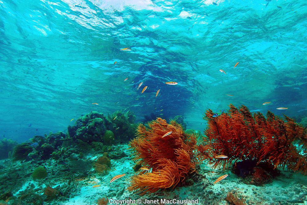 Klein Bonaire is more pristine than Bonaire's mane island. The shallows are full of soft corals and fish are plentiful. The underwater landscape is reflected in the under surface of the water. It has 25 or more moored dive sites.