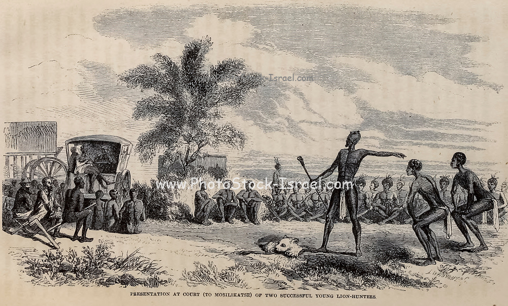 Presentation at Court (to Mosilikatse) of two successful young Lion-hunters From the Book ' Missionary travels and researches in South Africa ' including Sixteen Years Residence in the Interior of Africa. by Dr. David Livingstone Published in New York by Harper & Brothers 1858