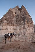 Cappadocia, Turkey.  November 8th 2017 <br />  A horse tethered to volcanic rock at Lucky Horse Ranch, Goreme, Cappadocia, Turkey.