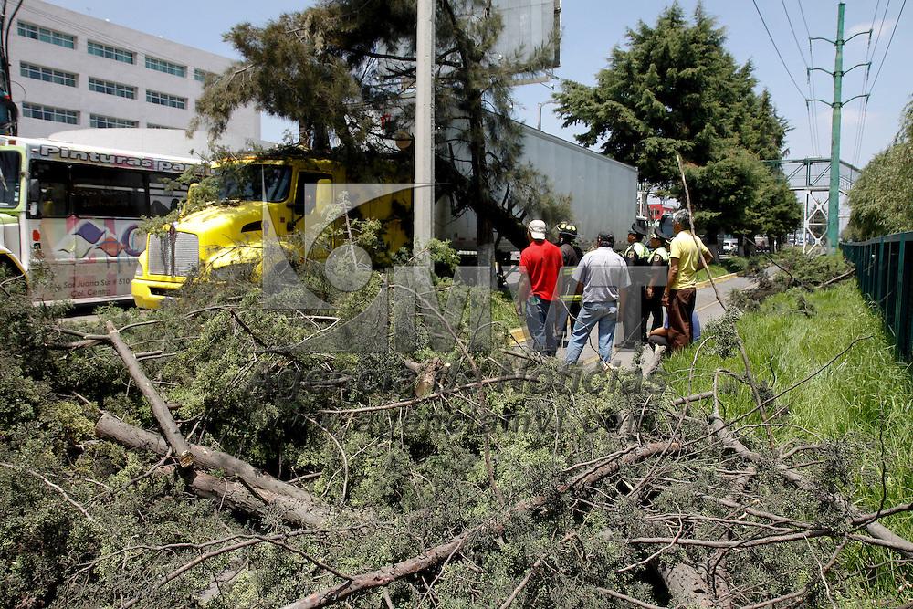 Metepec, México.- Bomberos de Metepec retiraron un árbol que termino a un costado de un tráiler que circulaba por Paseo Tollocan en los carriles de baja velocidad, no se registraron heridos en el lugar.  Agencia MVT / Crisanta Espinosa