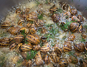 Hand picked snails for lunch, at the Moschonas family. In and around the village of Meronas.