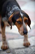 Stray dog, Kotor Montenegro