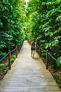Hiker on the Rain Forest Trail, Singapore Botanic Gardens, Singapore, Republic of Singapore
