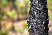 Burnt Palms, Litchfield National Park,Northern Territory,Australia