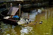Meerkoeten nest in Haagse gracht. Een plastic tas wordt gebruikt als onderdeel van het nest. - Coots nest in The Hague canal. A plastic bag is used as part of the nest.