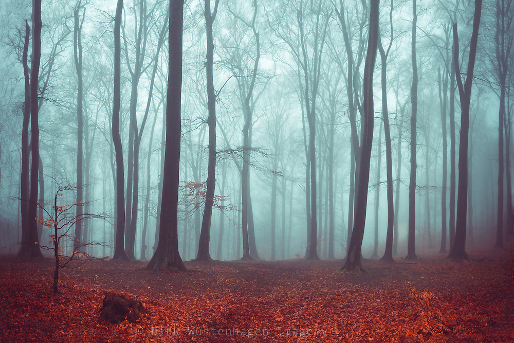 Deciduous forest on a misty late autumn day