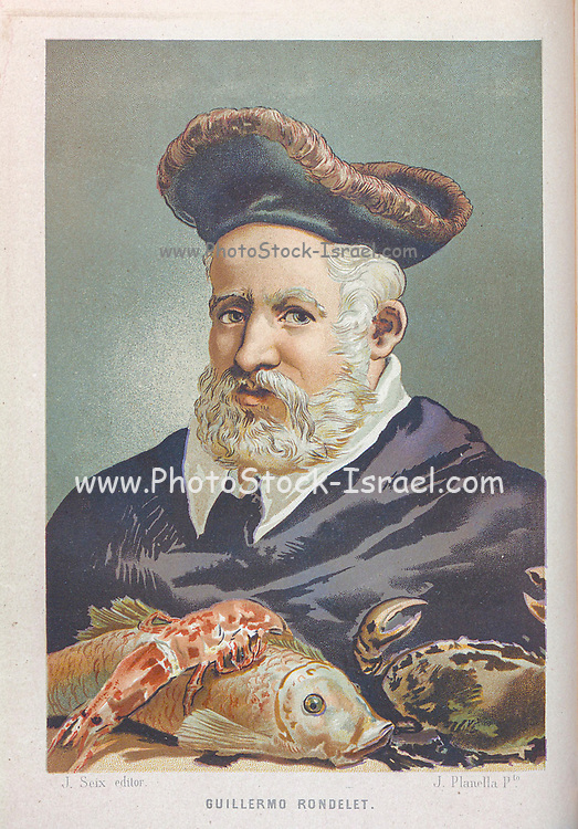 Guillaume Rondelet [Guillermo Rondelet] (27 September 1507 – 30 July 1566), known also as Rondeletus (Rondeletius), was Regius professor of medicine at the University of Montpellier in southern France and Chancellor of the University between 1556 and his death in 1566. He achieved renown as an anatomist and a naturalist with a particular interest in botany and zoology. His major work was a lengthy treatise on marine animals, From the book La ciencia y sus hombres : vidas de los sabios ilustres desde la antigüedad hasta el siglo XIX T. 2  [Science and its men: lives of the illustrious sages from antiquity to the 19th century Vol 2] By by Figuier, Louis, (1819-1894); Casabó y Pagés, Pelegrín, n. 1831 Published in Barcelona by D. Jaime Seix, editor , 1879 (Imprenta de Baseda y Giró)