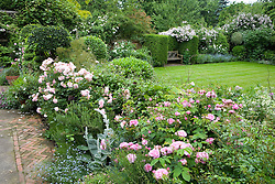 View from terrace to lawn. Looking over ballustrade with Rosa 'Ispahan' and 'Felicia' in the foreground