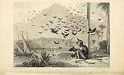 The Monkey and Crows From the book ' The Oriental annual, or, Scenes in India ' by the Rev. Hobart Caunter Published by Edward Bull, London 1836 engravings from drawings by William Daniell