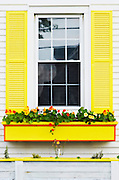A window with yellow shutters and a yellow window box filled with Nasturtium in Beals Island, Maine.