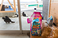 """I hamnen på ön Tashirojima i Japan bor några katter. Besökare lämnar kattmat i en väntkur. Maten distrubueras senare ut till katterna.<br />  <br /> Tashirojima kallas för """"kattön"""" eftersom här lever hundratals katter tillsammans med ca 50 personer.   <br /> <br /> Ishinomaki, Miyagi Prefecture, Japan. <br /> <br /> Fotograf: Christina Sjögren<br /> Copyright 2018, All Rights Reserved"""