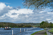 Henley on Thames. United Kingdom.   2018 Henley Royal Regatta, Henley Reach. <br />   <br /> Course Construction: General View, towards Temple Island, Showing the Boom's and Posts on the Berkshire side.<br /> <br /> Wednesday  25/04/2018<br /> <br /> [Mandatory Credit: Peter SPURRIER:Intersport Images]<br /> <br /> Leica Camera AG  LEICA M (Typ 262)  f6.8  1/750sec  mm  25.6MB