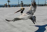 Redondo Beach Pier<br /> Redondo Beach, California