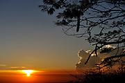 Poinciana tree (Delonix regia) silhouetted against setting sun. Vung Tau, Vietnam