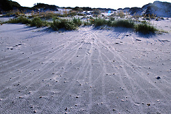 Turtle Tracks On Beach