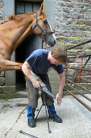 Farrier shoeing a horse on a farm in Lancashire