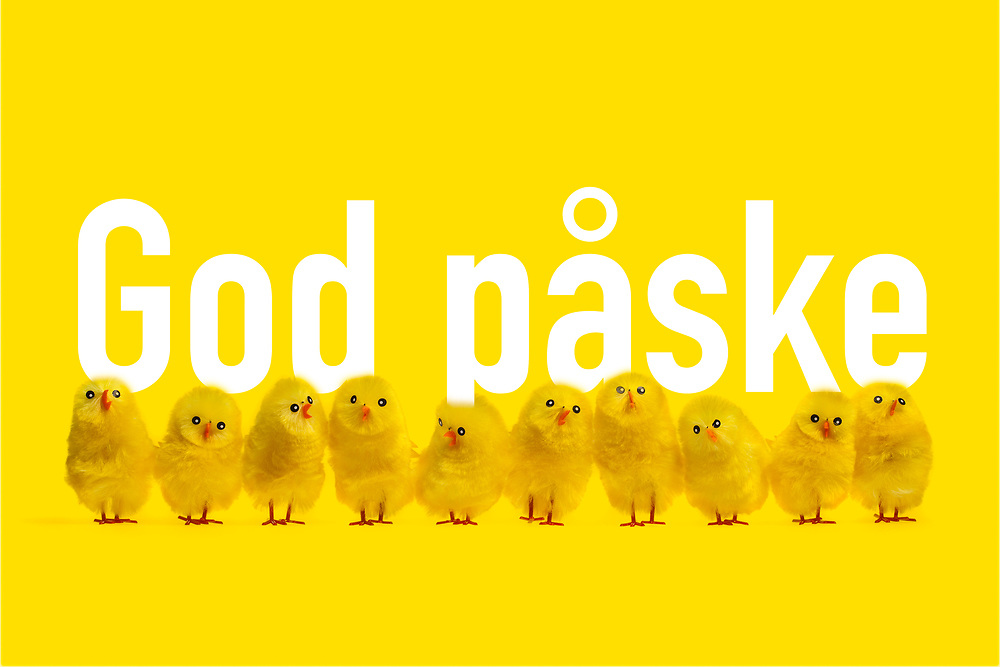 En lang rekke påskekyllinger ønsker «god påske».