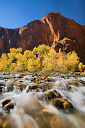 The Virgin River at the Temple of Sinawava, Zion National Park, Utah.