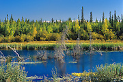 Boreal forest, wetland and preCambrian Shield<br />  Yellowknife Highway<br /> Northwest Territories<br /> Canada