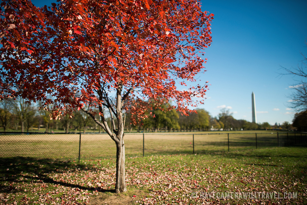 Red leaves on autumn trees on the National Mall in Washington DC.