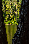 A pair of hemlock trees frame a view of Olallie Lake and the forest that surrounds it in the Mount Baker-Snoqualmie National Forest in Washington state.