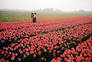 Tulpenveld in Noordwijkerhout, Bollenstreek. © Holland Kodak Ektar serie