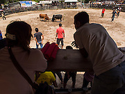 08 FEBRUARY 2014 - PHAWONG, SONGKHLA, THAILAND: People watch a bullfight in rural Songkhla province, Thailand. Bullfighting is a popular past time in southern Thailand. Hat Yai is the center of Thailand's bullfighting culture. In Thai bullfights, two bulls are placed in an arena and they fight, usually by head butting each other, until one runs away or time is called. Huge amounts of mony are wagered on Thai bullfights - sometimes as much as 2,000,000 Thai Baht ($65,000 US).   PHOTO BY JACK KURTZ