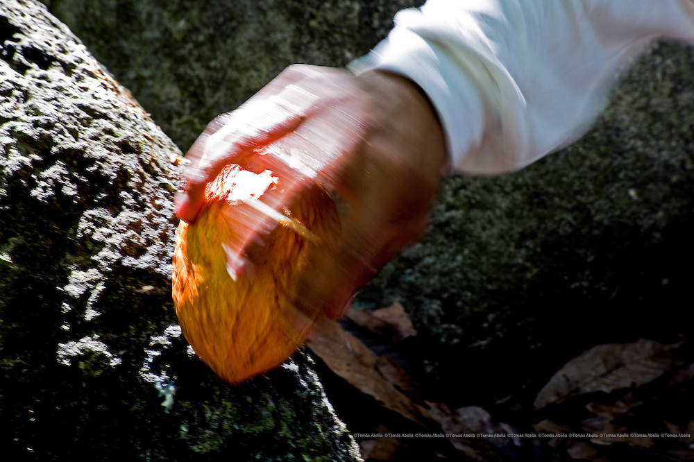 The cocoa grown by the farmers who belong to the Maya Network of Organic Organisations is free from agro-chemicals. Mazatán, Mexico.
