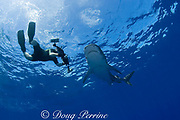 underwater photographer and tiger shark ( Galeocerdo cuvier ) North Shore, Oahu, Hawaii, USA ( Central Pacific Ocean ) MR 390