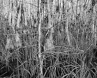 Swamp walk with Kristen and Angela in the Everglades behind  Clyde Butcher's Big Cypress Gallery. Image taken with a Leica X2 camera (ISO 100, 24 mm, f/5, 1/200 sec).