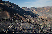 Wildfire damage along Mulholland Highway. The Woolsey wildfire started on November 8, 2018 and has burned over 98,000 acres of land, destroyed an estimated 1,100 structures and killed 3 people in Los Angeles and Ventura counties and the especially hard hit area of Malibu. California, USA