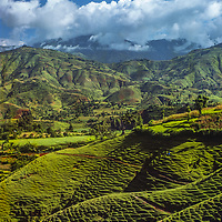 Lushed pastures stretch up hills in Nepal.