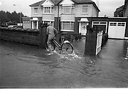 """Flooding at the Dodder..1986..26.08.1986..08.26.1986..28th August 1986..As a result of Hurricane Charly (Charlie) heavy overnight rainfall was the cause of severe flooding in the Donnybrook/Ballsbridge areas of Dublin. In a period of just 12 hours it was stated that 8 inches of rain had fallen. The Dodder,long regarded as a """"Flashy"""" river, burst its banks and caused great hardship to families in the 300 or so homes which were flooded. Council workers and the Fire Brigades did their best to try and alleviate some of the problems by removing debris and pumping out some of the homes affected..Note: """"Flashy"""" is a term given to a river which is prone to flooding as a result of heavy or sustained rainfall...Photo shows a cyclist battling against the elements as the rain continues to fall."""