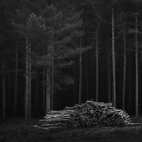 Took a trip to Thetford forest on saturday, was lovely and foggy until dawn then it disappeared like a shot annoyingly
