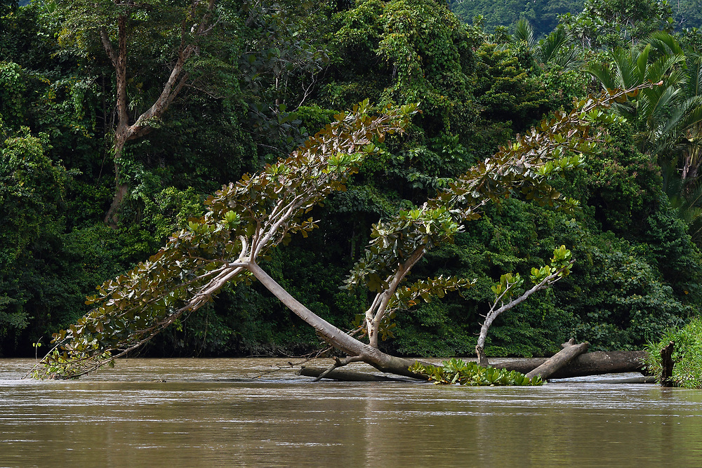 """Up the Lenguru rainforest river, near Lobo village, Triton Bay, mainland New Guinea, Western Papua, Indonesian controlled New Guinea, on the Science et Images """"Expedition Papua, in the footsteps of Wallace"""", by Iris Foundation"""