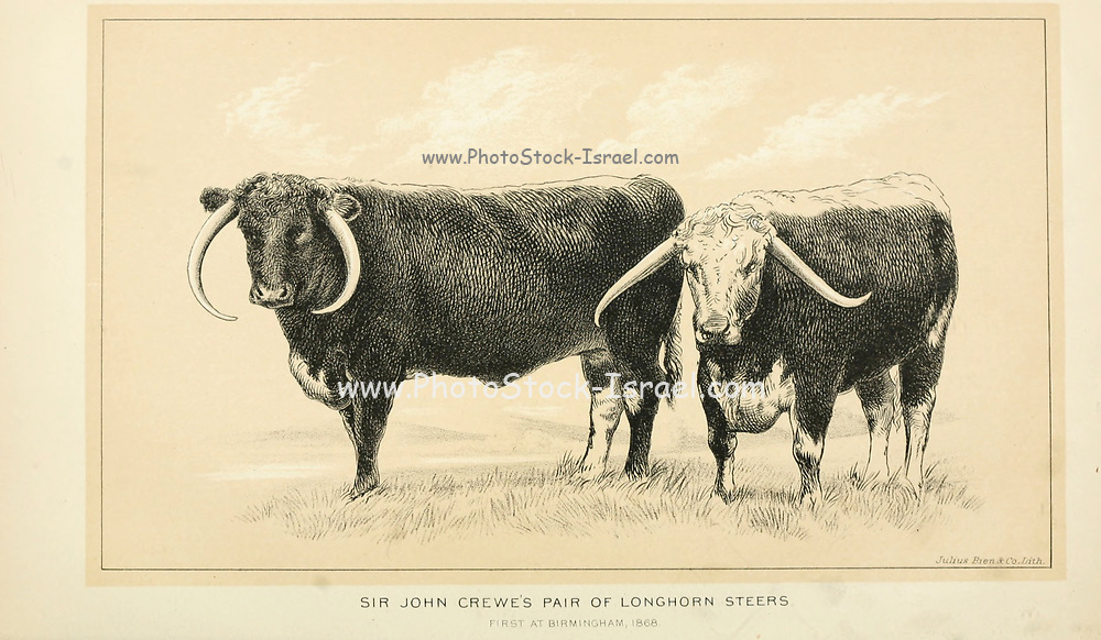 Longhorn steers from Cattle and dairy farming. Published 1887 by Govt. Print. Off. in Washington. United States. Bureau of Foreign Commerce (1854-1903)