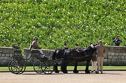 Fell ponies, Balmoral Nevis and Notlaw Storm, and the Duke of Edinburgh's driving carriage in the Quadrangle ahead of the funeral of the Duke of Edinburgh at Windsor Castle, Berkshire. Picture date: Saturday April 17, 2021.