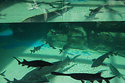 Aquarium tanks with fish swimming inside Rizhao Ocean Park, Marina, during opening ceremonies, Rizhao, Shandong Province, China