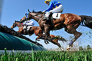 27 March 2010 : Bernie Dalton and MISS CROWN (#1) take one of the early hurdles in the Woodward Kirkover hurdle race at the Carolina Cup.
