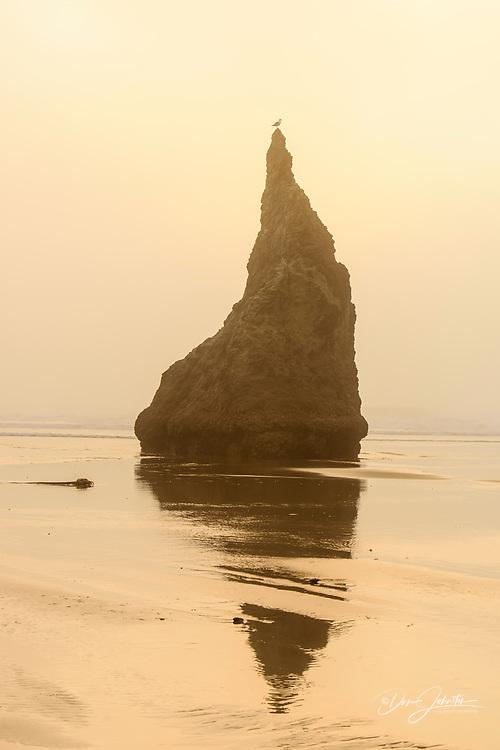 Bandon Beach sea stacks in the late afternoon fog, Bandon, Oregon, USA